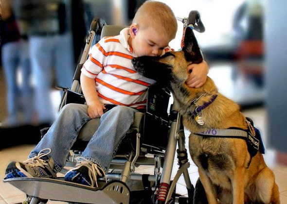 Perros que cuidan de niños