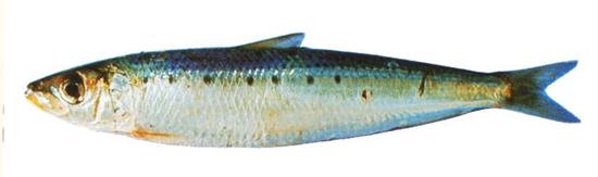 ¿Estás en la playa? ¡Aprovecha y come sardinas asadas!
