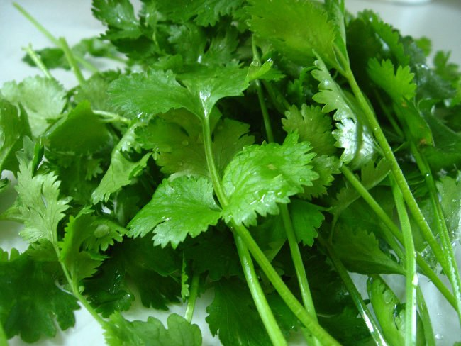 El cilantro: una hierba con alta densidad nutritiva