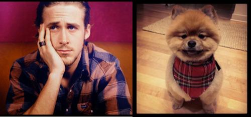 ¿Quién es más mono Ryan Gosling o un cachorro?