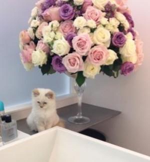 El gato de Karl Lagerfeld tendrá un bolso Chanel en su honor