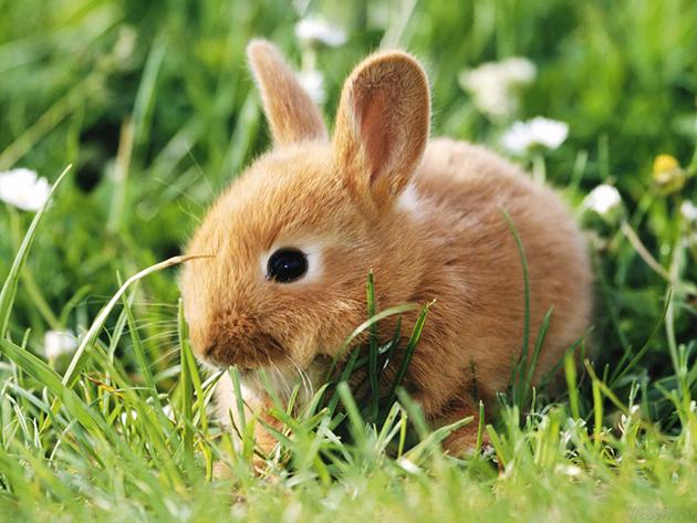 Europa prohibe las pruebas cosméticas en animales