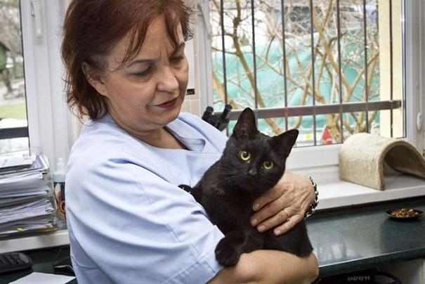 No vas a creer cuál es la 'profesión' de este adorable gato negro