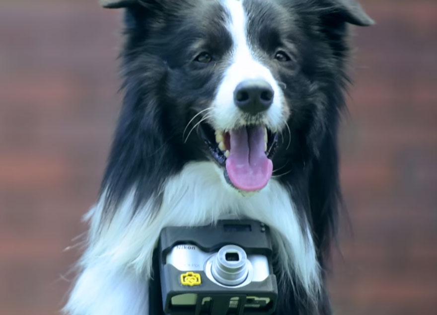 Estas son las fotos hechas por el primer perro fotógrafo