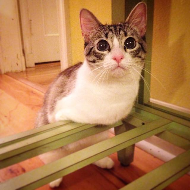 La emotiva historia de un gato que nación con solo dos patas