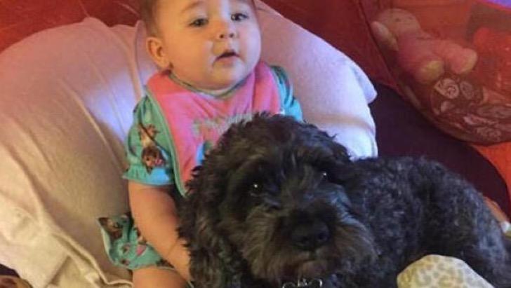 El valiente perro que dio su vida por salvar a un bebé