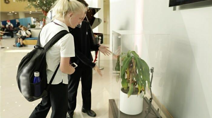 IKEA explica el acoso escolar con dos plantas y el resultado es fascinante