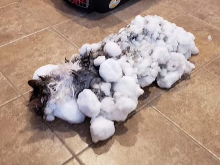 La sorprendente historia de Fluffy, el gato que casi muere congelado