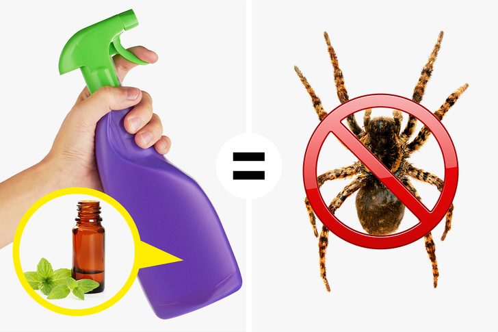 9 Ways to Keep Spiders and Insects Out of Your House