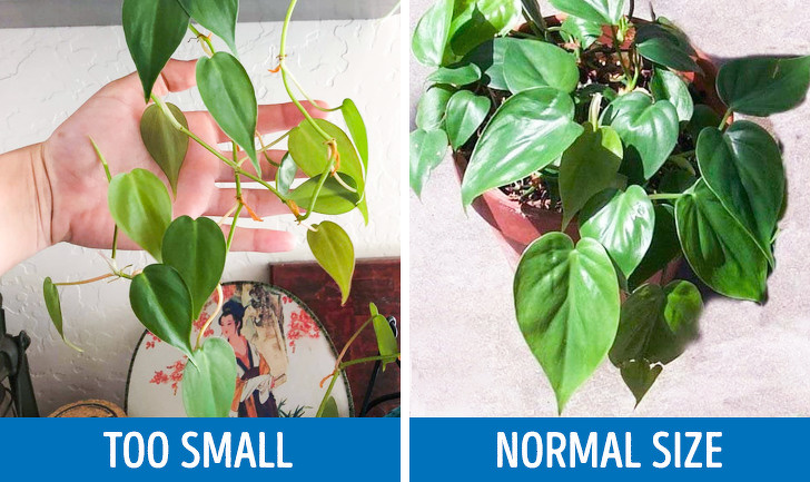 8 Ways Your Plant Tells You Something Is Wrong (and How to Fix It)